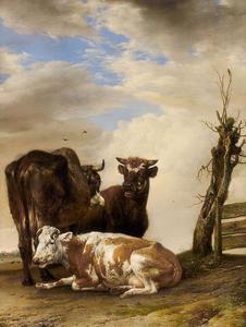 Twee koeien en een stier bij een hek naast een kale boom