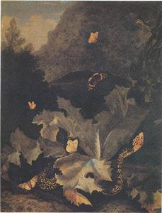 Distel, slang, vlinders en andere planten