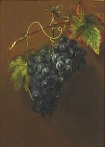 Stilleven van een druiventros