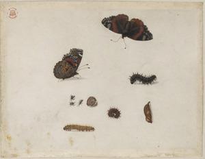 Tien insecten, waaronder een atalanta en brakwesp