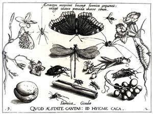 Kaneel, druiven, bloemen, een libel, vlinder en andere insecten