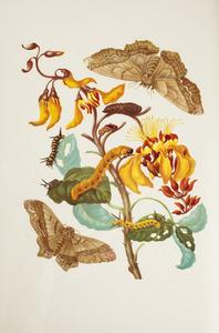 Palisadenboom met metamorfose van de erythrina mot