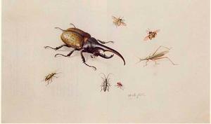 Herculeskever en zes andere insecten