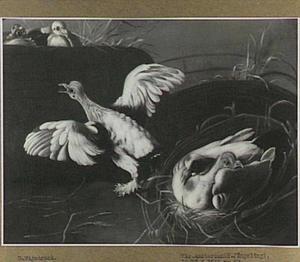 Vogelnest met uitvliegend jong