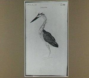 Cocopinima (Braziliaanse vogel)
