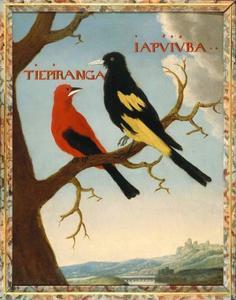 Rode tangare en een geelstuitbuidelspreeuw
