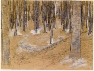Wood with beech trees, drawing