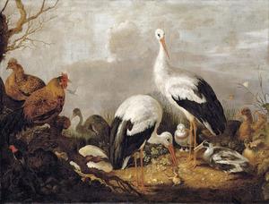 Ooievaars, wilde eenden, een reiger, een kikker en andere vogels in een landschap