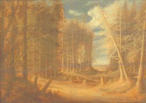 Boslandschap met omvallende, dode bomen