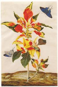 Klaroen met twee Zuid-Amerikaanse vlinders