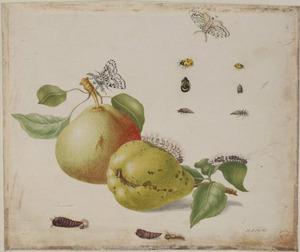 Peren, zevenstippelig lieveheersbeestje en metamorfose van vlinder