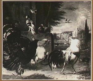 Vechtende haan en kalkoen in een hoenderhof, met kuikens, duiven en andere vogels