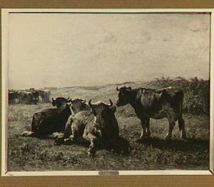 Een kudde koeien in de vroege morgen