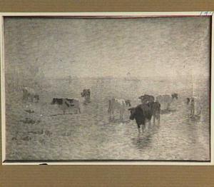 Koeien in de zomer bij Rhenen