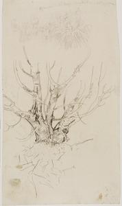 Studie van een boomstronk
