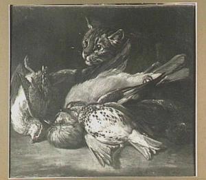 Kat bij buit van gevogelte