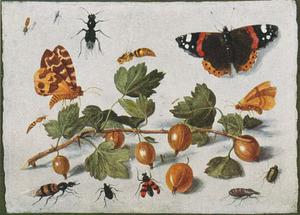 Studie van insecten rondom een takje met kruisbessen, op een witte ondergrond