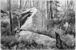 Afgestorven woud in Canada