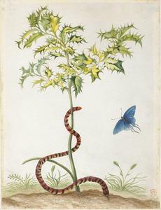 Hulst met valse koraalslang en koningskroonvlinder