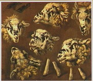 Zes studies van de kop van een schaap