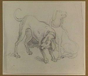 Studies van twee honden