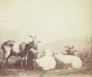 Rustende geiten en schapen in een landschap