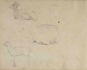 Schetsboekblad met schetsen van een antilope