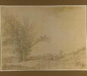 Bomengroep in landschap bij de duinen