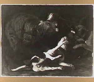 Geketende beer in gevercht met honden