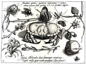 Krab, vlinder, bloemen en insecten