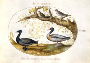 Twee eenden en twee zangvogels