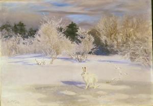 Winterlandschap met sneeuwhaas