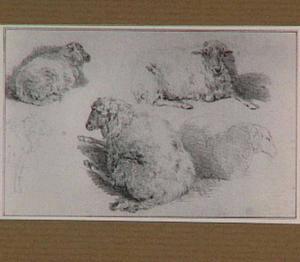 Vijf schapen