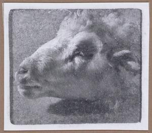 Kop van een schaap, naar links