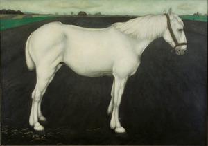 Wit paard op bouwland