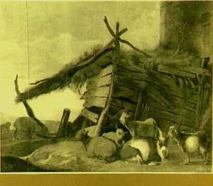 Rustende schapen en geiten bij een schuur