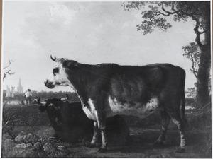 Twee stieren in een weidelandschap