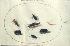 Zeven insecten, waaonder kevers en een hommel