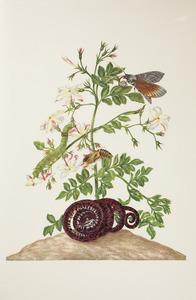 Grote jasmijn met metamorfose van de cassavevlinder en een tuinboa
