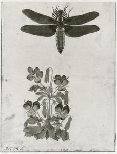 Libel en driekleurig viooltje
