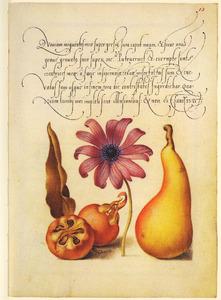 Tuinanemoon, mispel en perenbloesem