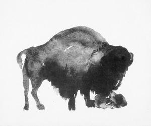 bizon met pas geboren jong