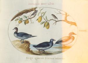 Twee zangvogels, twee eenden en een eendachtige