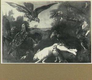 Roofvogels rond een dood wit konijn