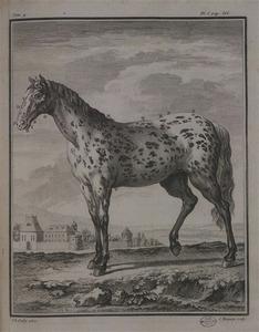 Cheval domestique