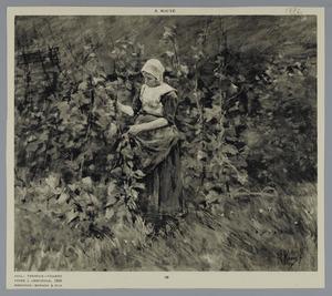 In de boomgaard
