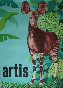 Artis-Affiche: okapi's in Artis