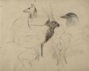 Schetsboekblad met schetsen van herten en een kop van een kauw