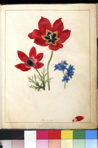 Drie voorjaarsbloemen