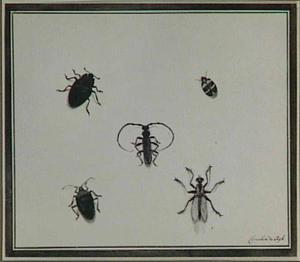 Vijf insecten